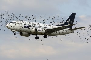 Aumentano i casi di bird strike: cosa sono e quali sono le cause