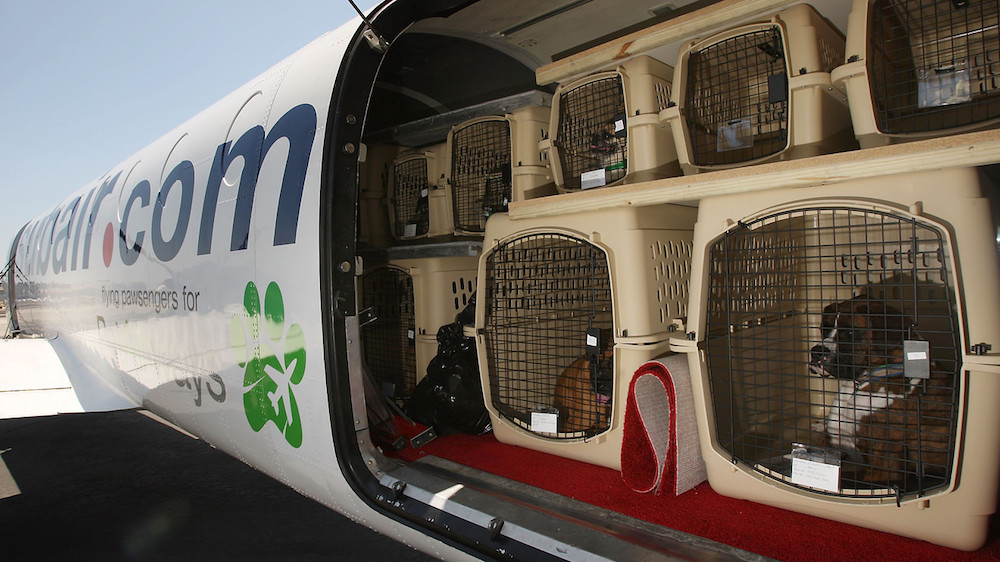 Viaggiare in aereo con gli animali: tutto quello che c'è da sapere