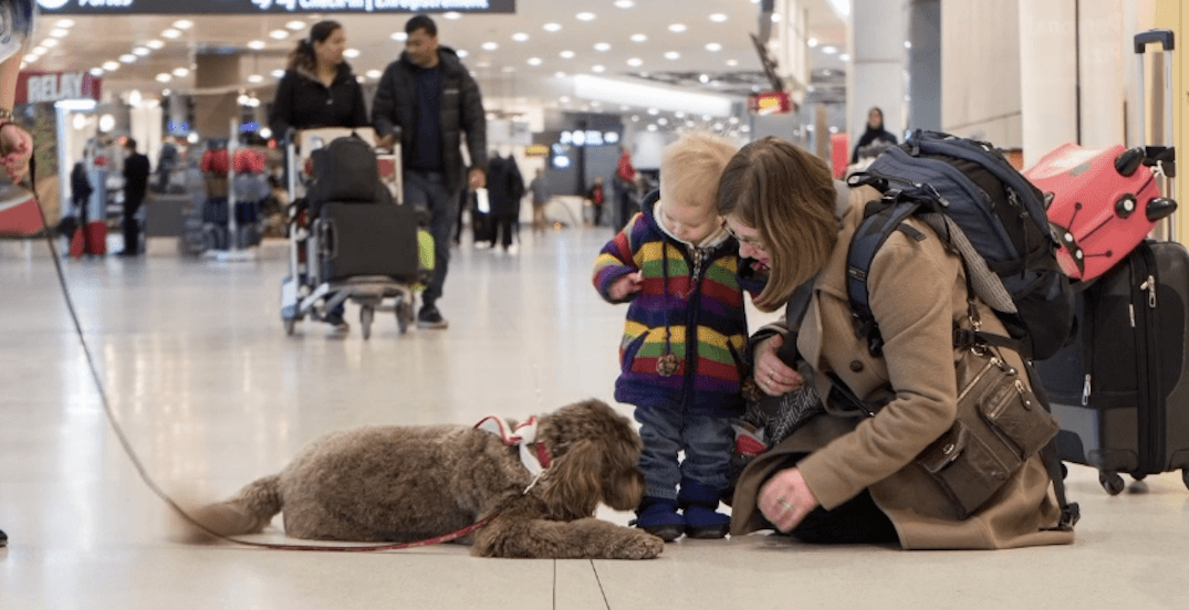 Pet therapy at the airport in Toronto: no more stress while travelling