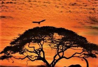 tramonto in sud africa con elefante e uccello