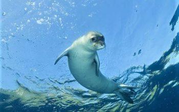 foca nel mare della Grecia