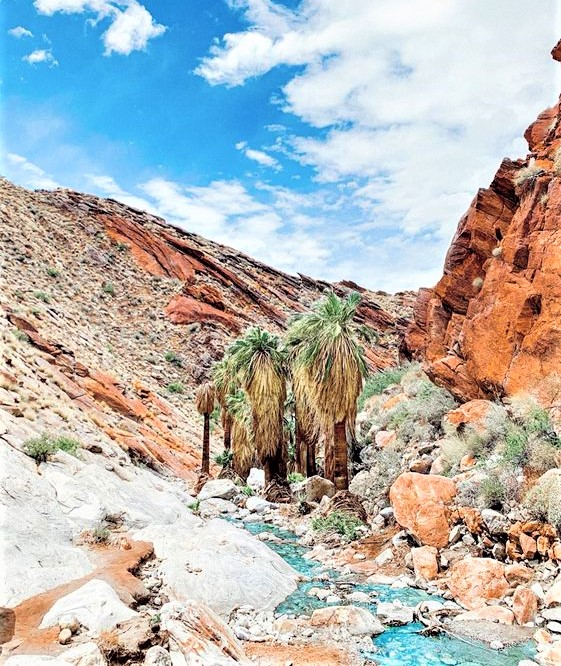 oasi dove riposarsi nel deserto della California