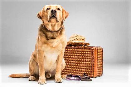 cane beige con borsa in vimini
